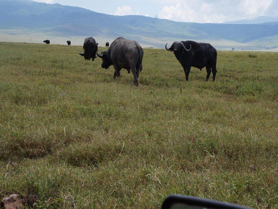 Safari adventures in Uganda Africa
