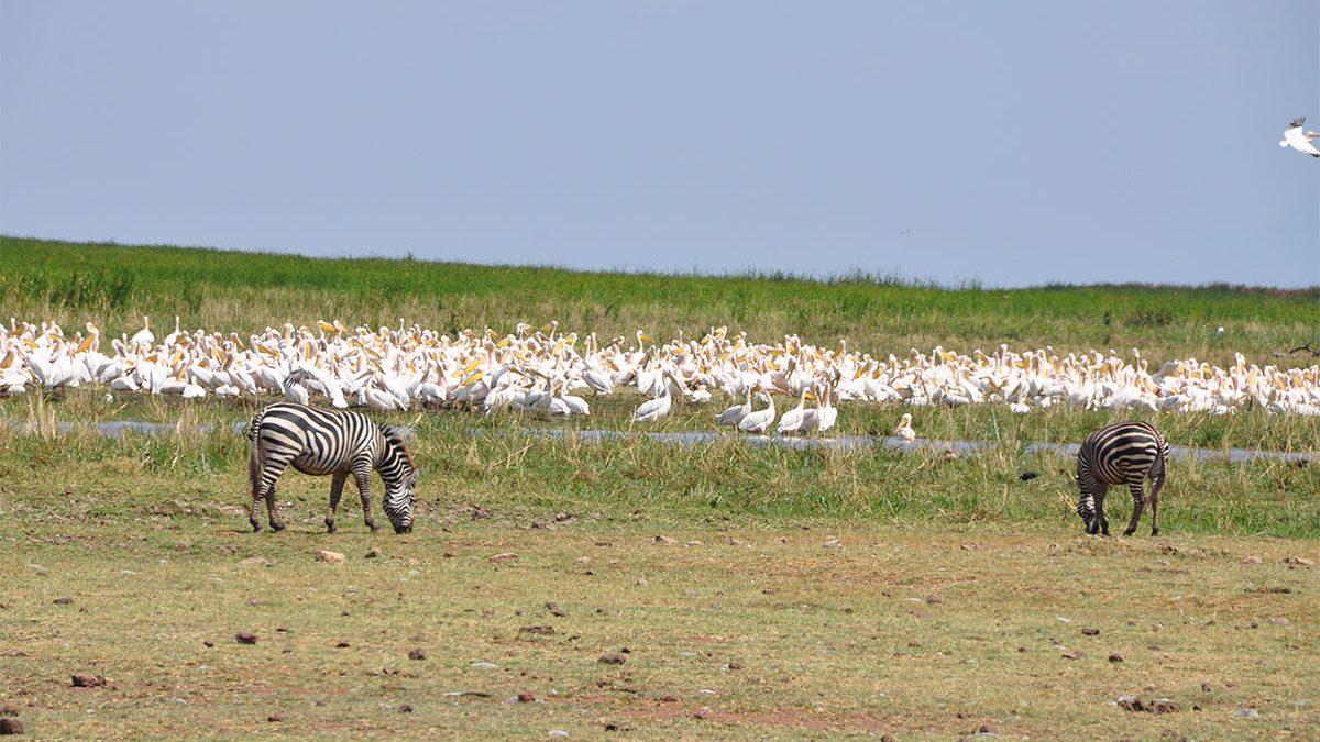 Safari & tours to Lake Manyara National Park