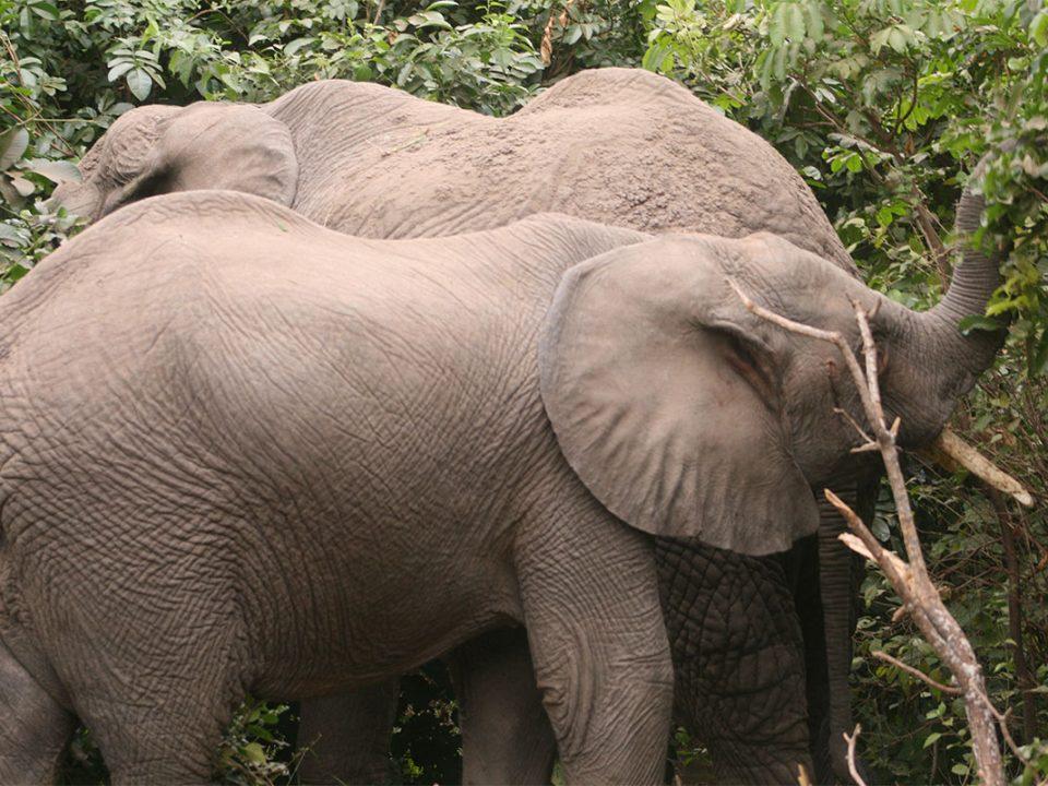 Safari tours to Arusha National park