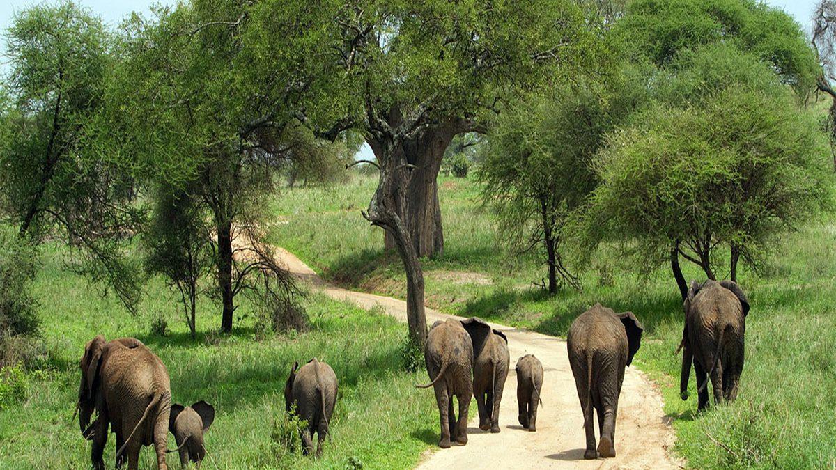 Safari tours to terangire national park