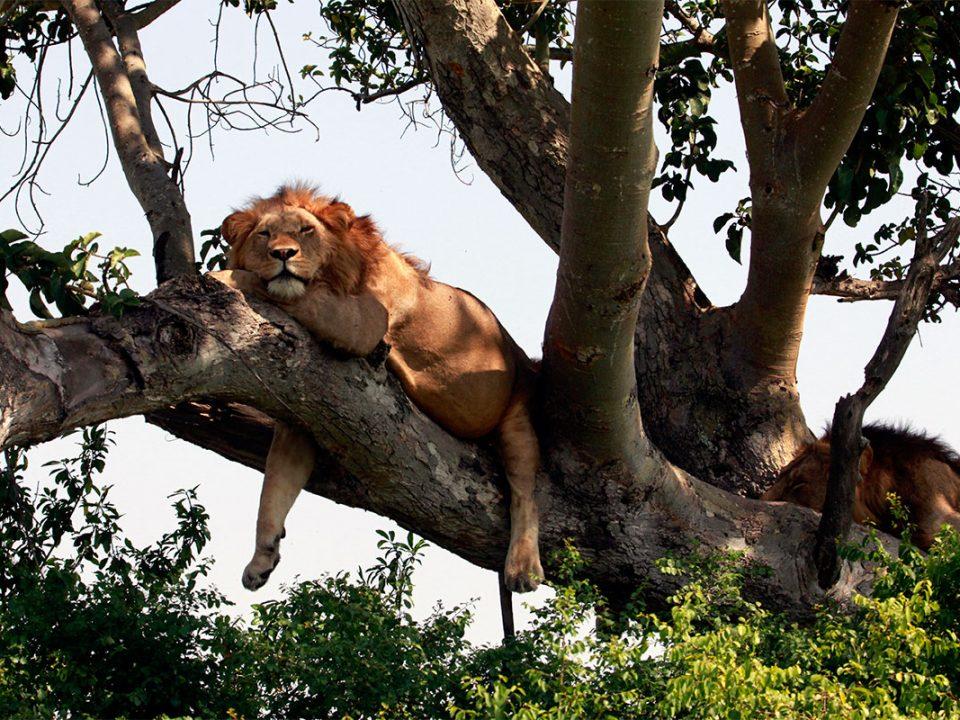 Safari in Uganda Africa
