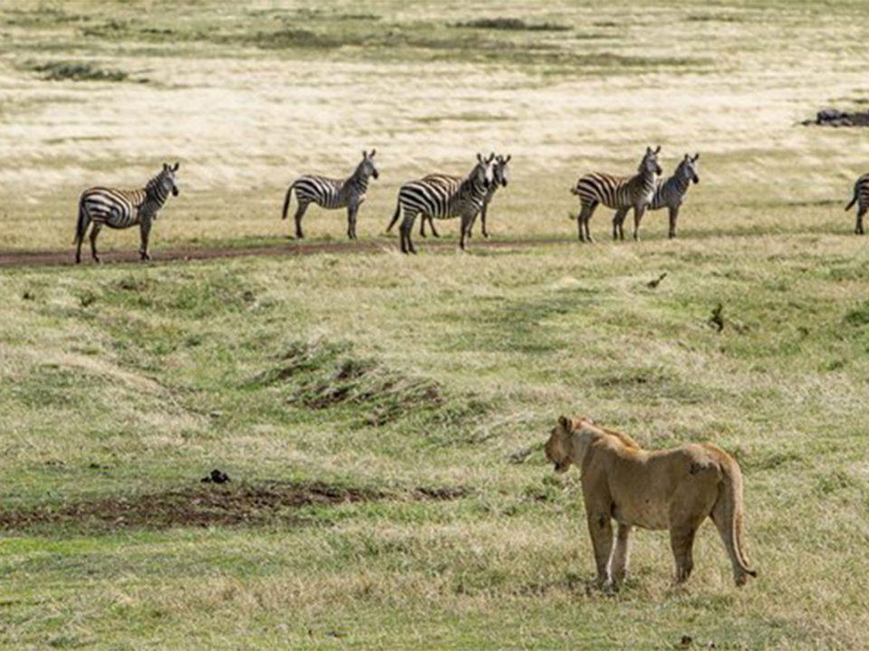Tanzania safari tours to burigi chato national park