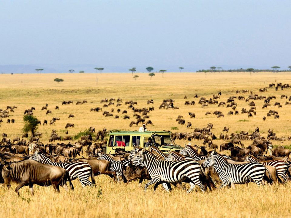 Safari tours to serengeti national park