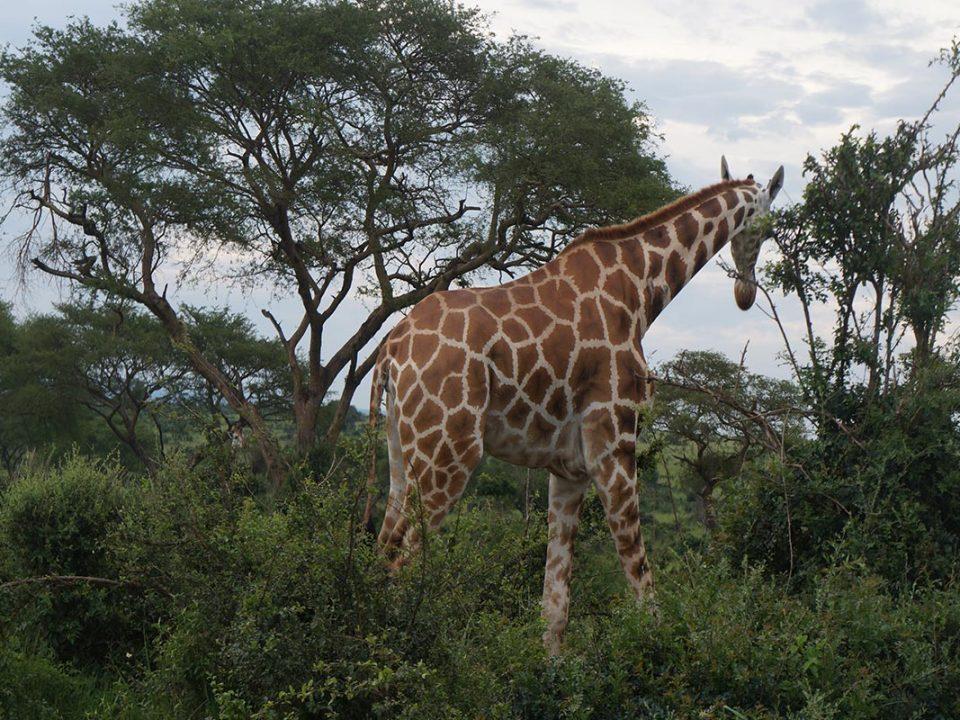short weekend safaris