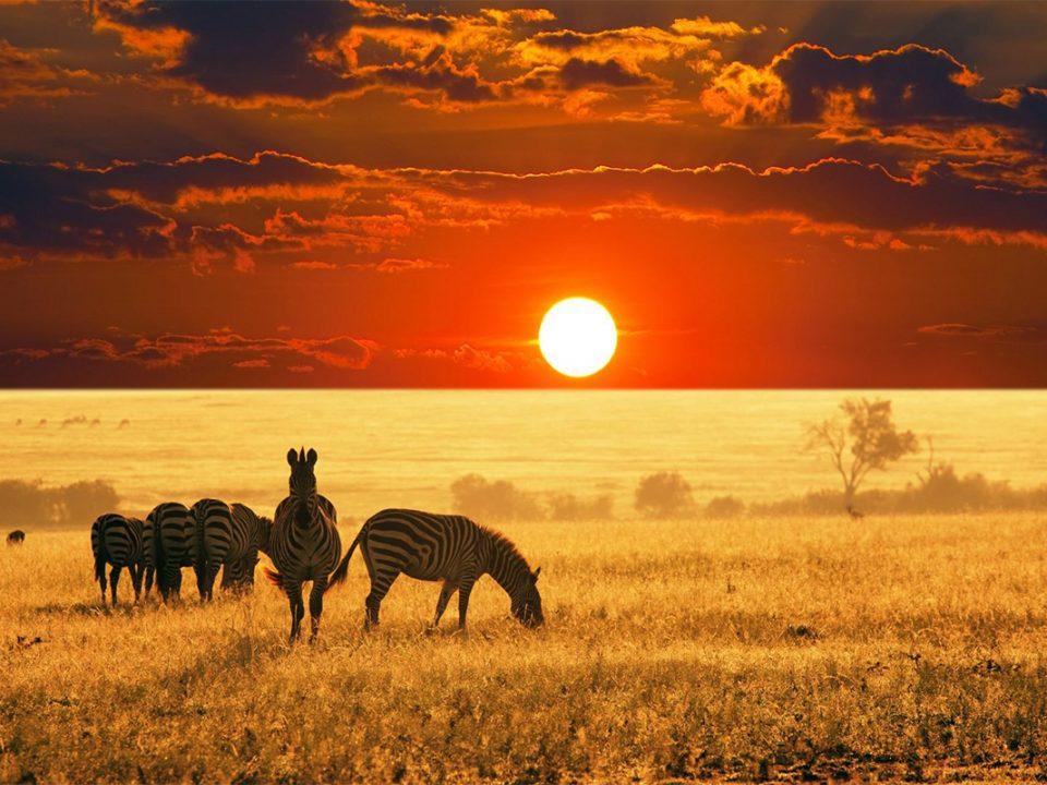 5 Days Serengeti & Ngorongoro crater safari