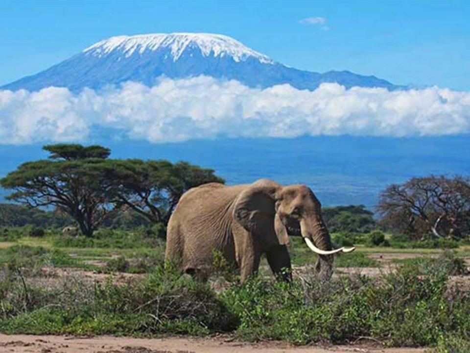 Tazania safari to MOUNT kIrimanjaro