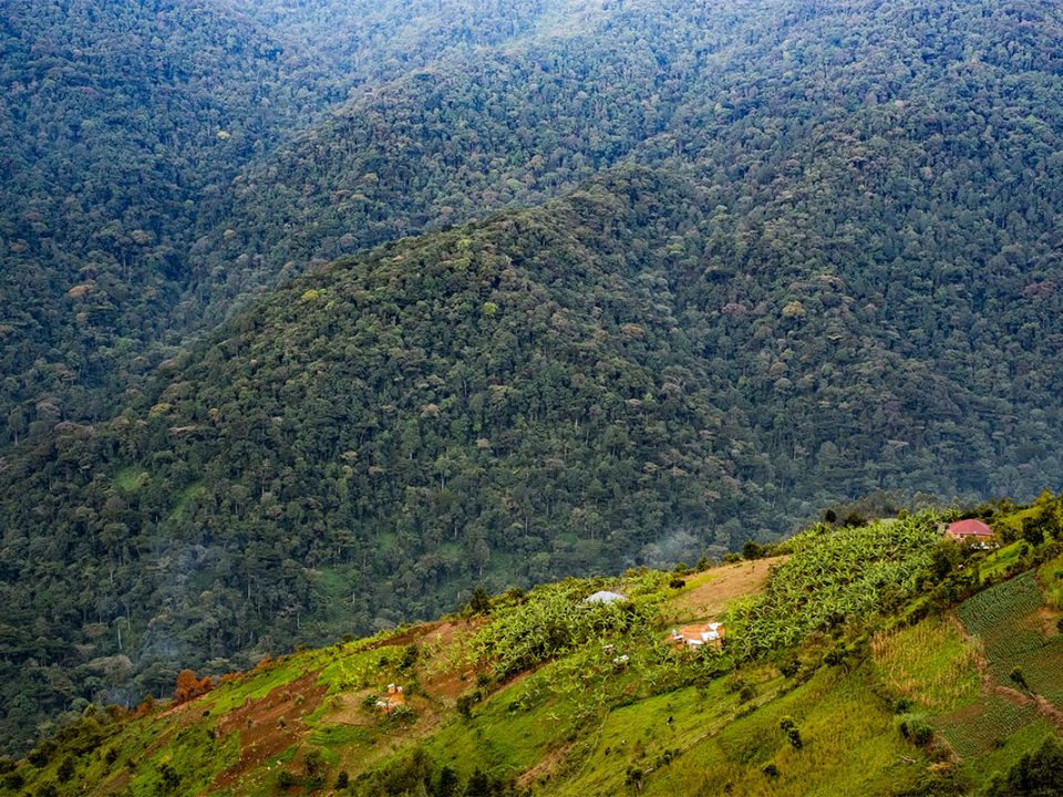 Tips for planning your trip to Bwindi