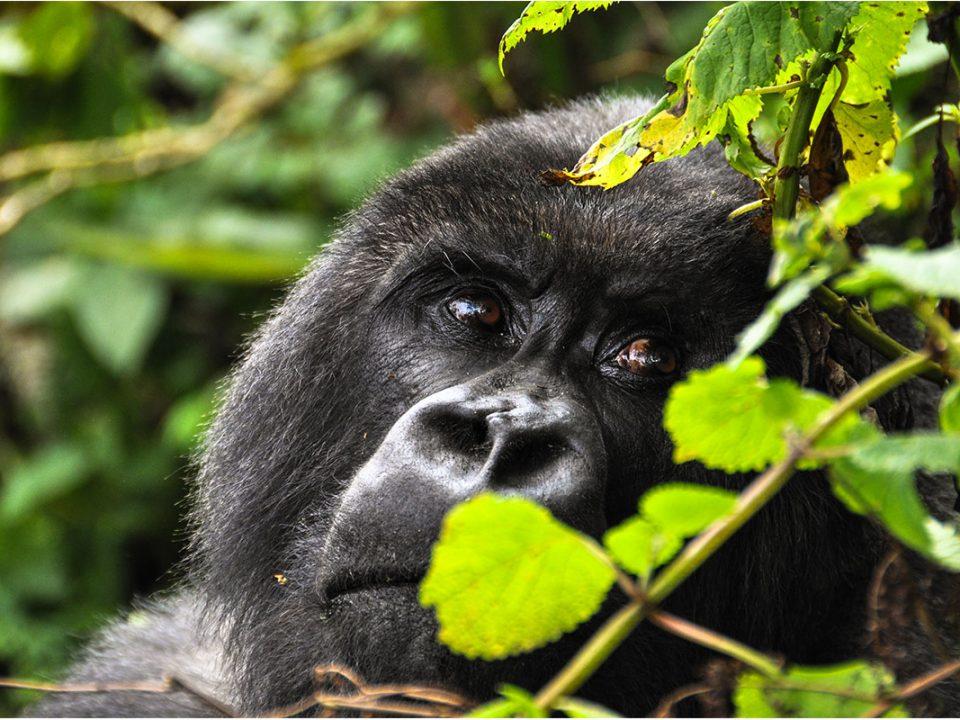 Top safari destinations in East Africa