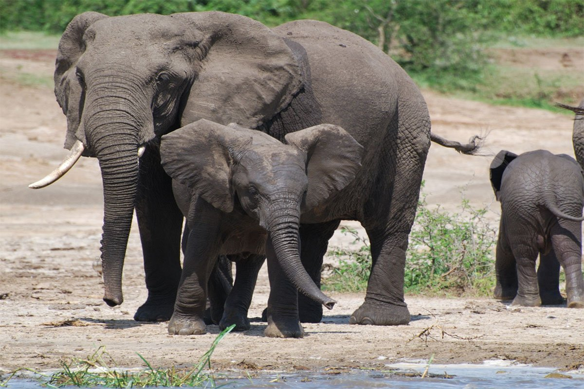 Top things to do in Queen Elizabeth National Park
