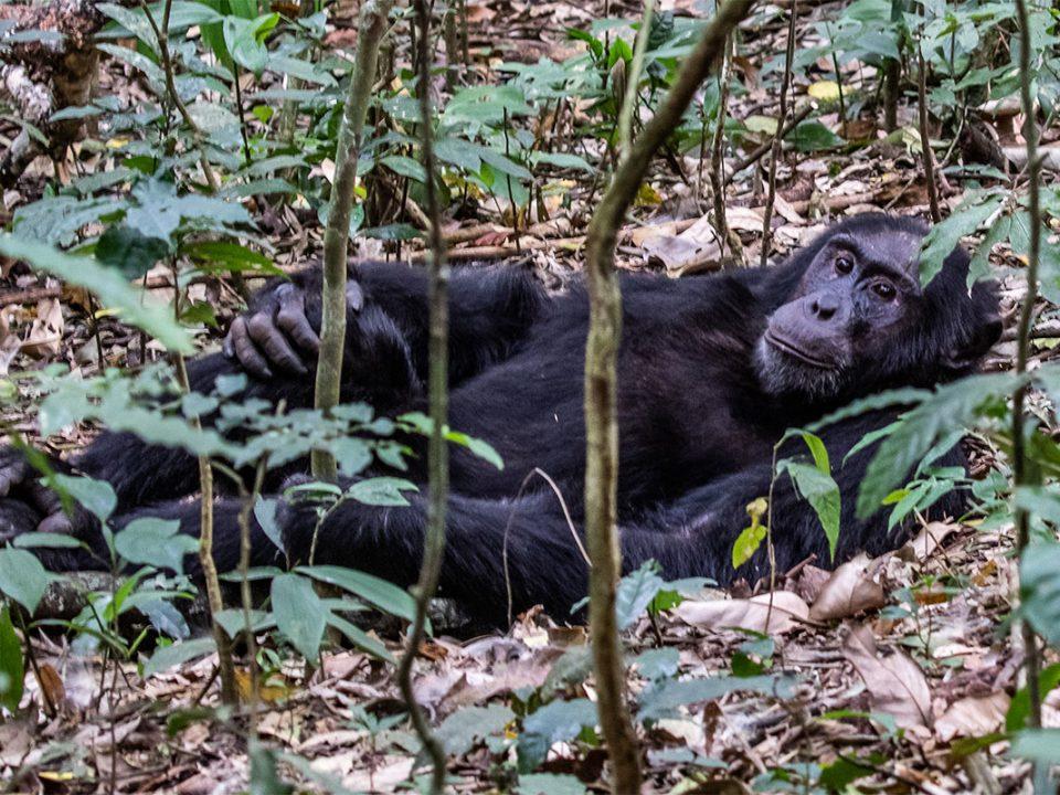 Travel guide fr Kibale forest National Park