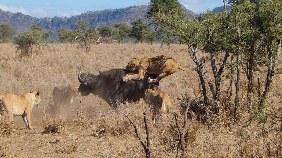 Turners springs in serengeti Tanzania