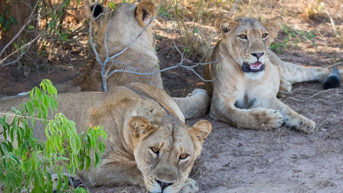 Uganda Africa Safaris and holiday adventures