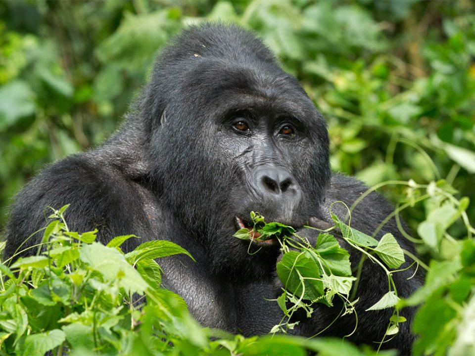 Uganda budget safari holidays
