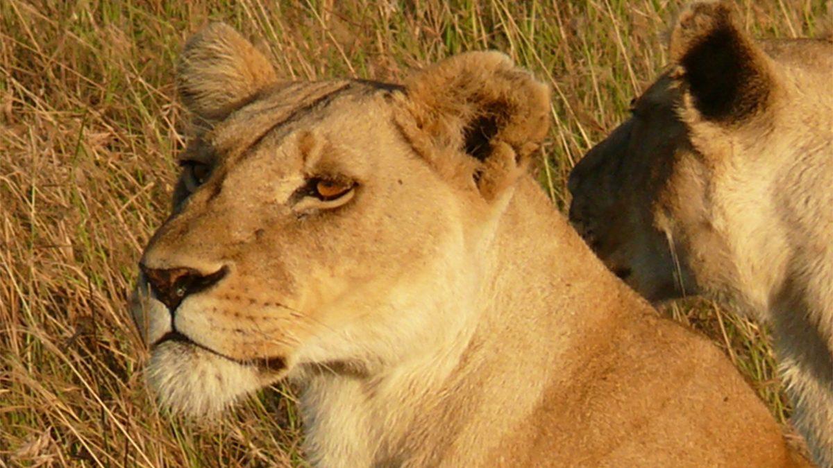 9 days Uganda safari starting from Malaba