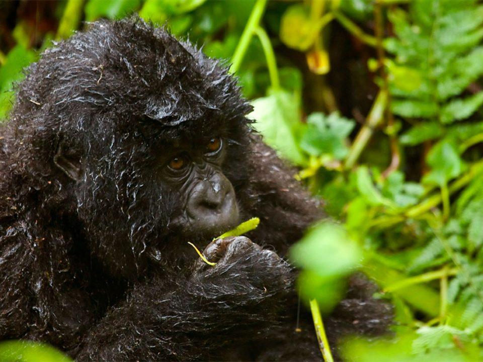 Uganda safari in November