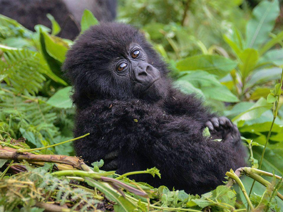 Uganda safari in September