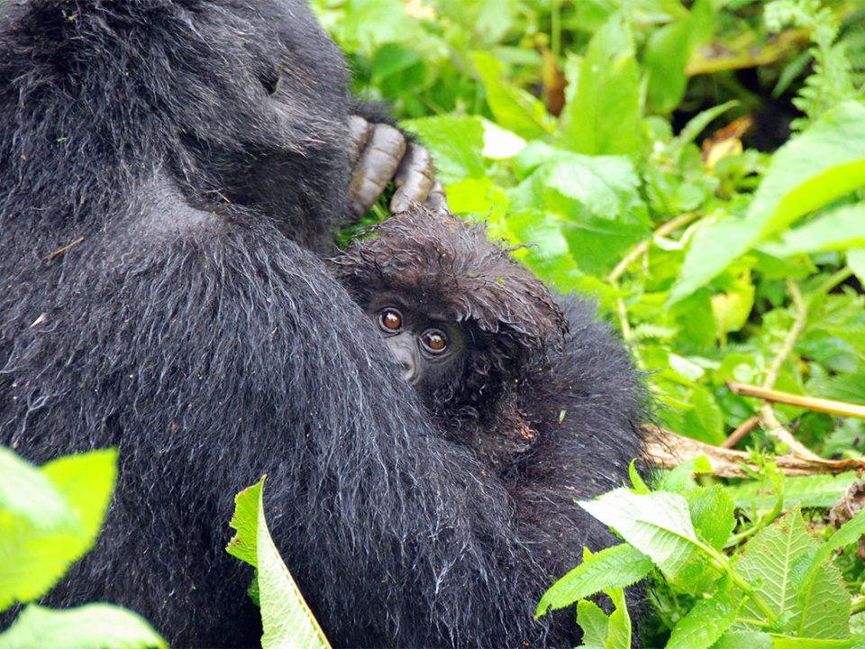 Uganda safari in October