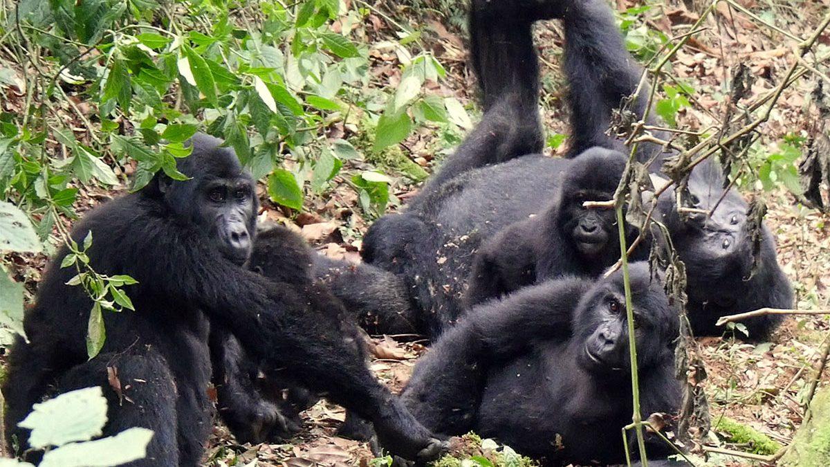 Uganda safari options