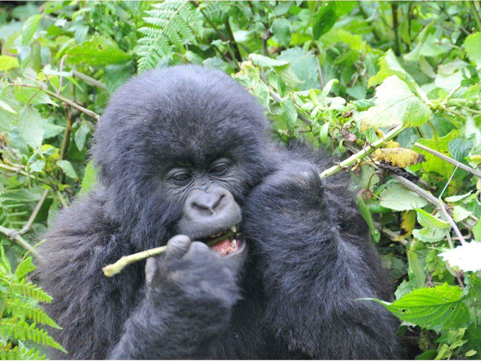 Uganda safari tours and bwindi gorilla trekking