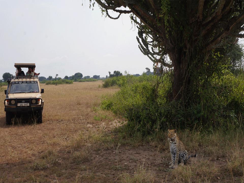 Uganda safaris budget