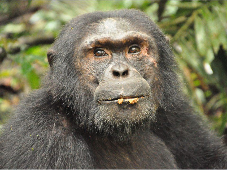 Uganda safaris in June