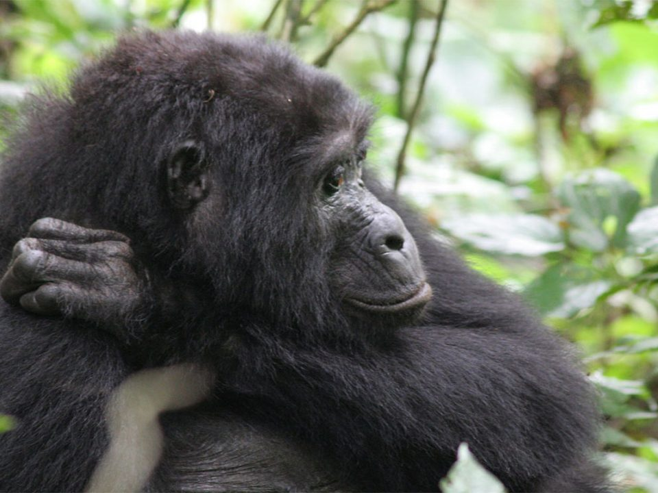 Uganda travel and gorilla tracking tours