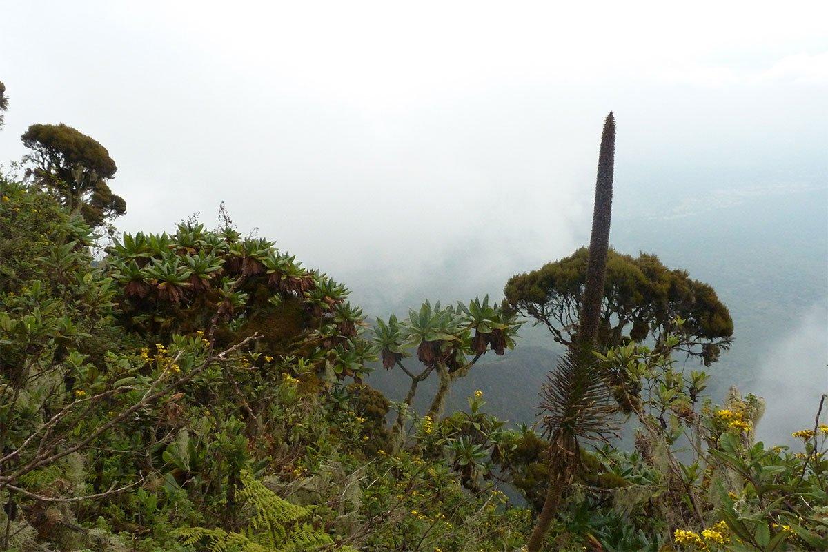 Vegetation fo Mgahinga National Park