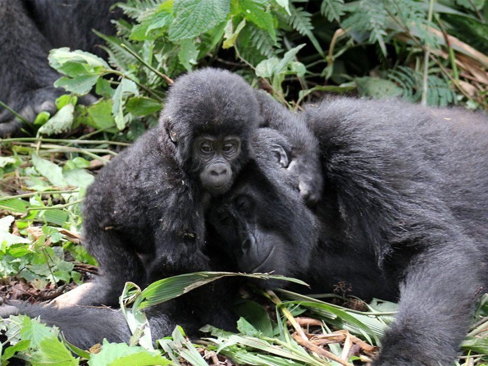 Visit Uganda safaris and holidays