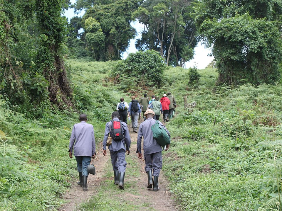 What is the different between gorilla tracking and trekking