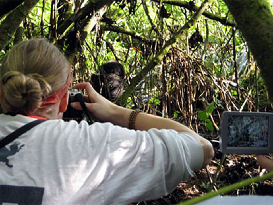 What to consider before booking a gorilla habituation experience