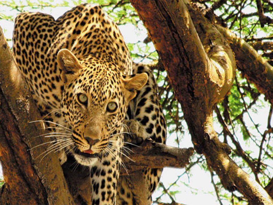 What to expect on safari in Tanzania
