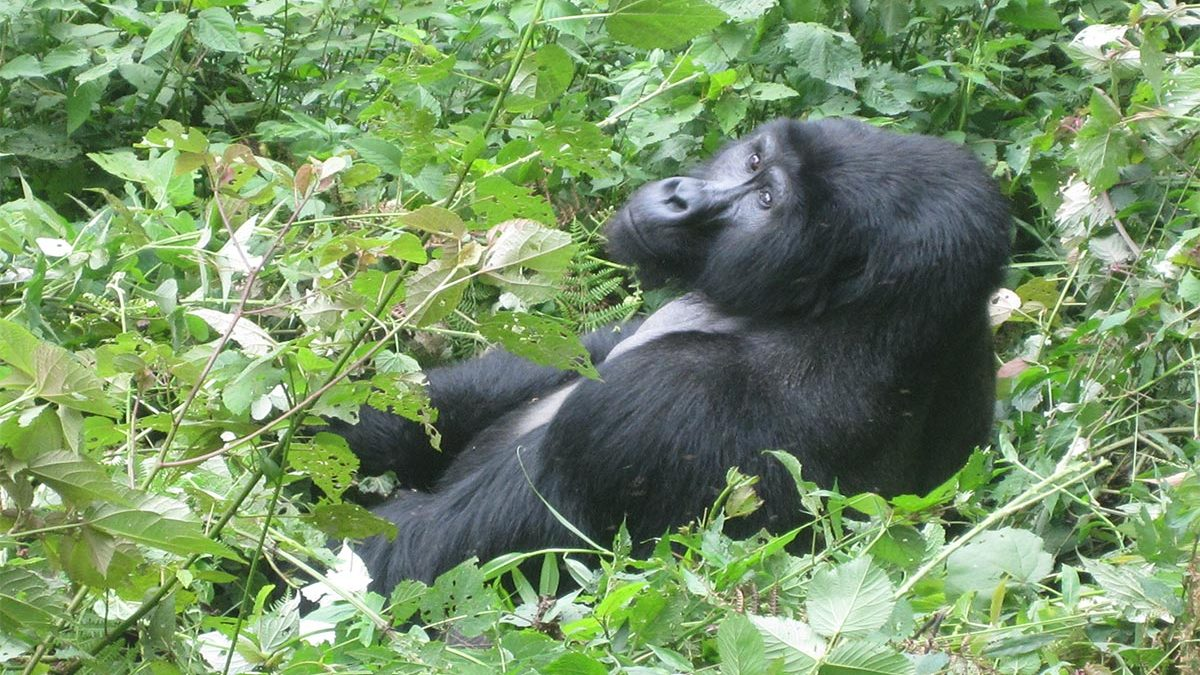 What to see and do in Uganda