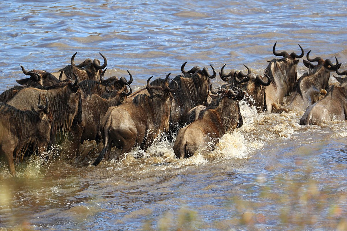 When is the best time to visit Kenya for safari