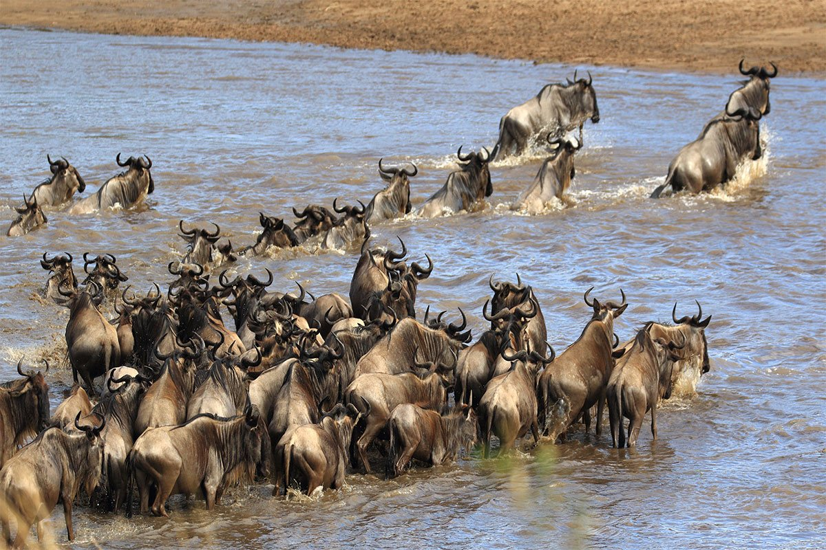 When is the best time to visit Serengeti