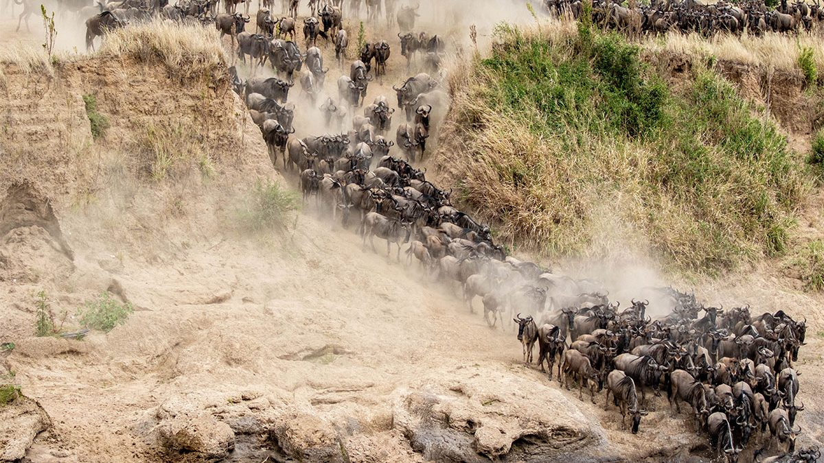 where to go on East African safari in January