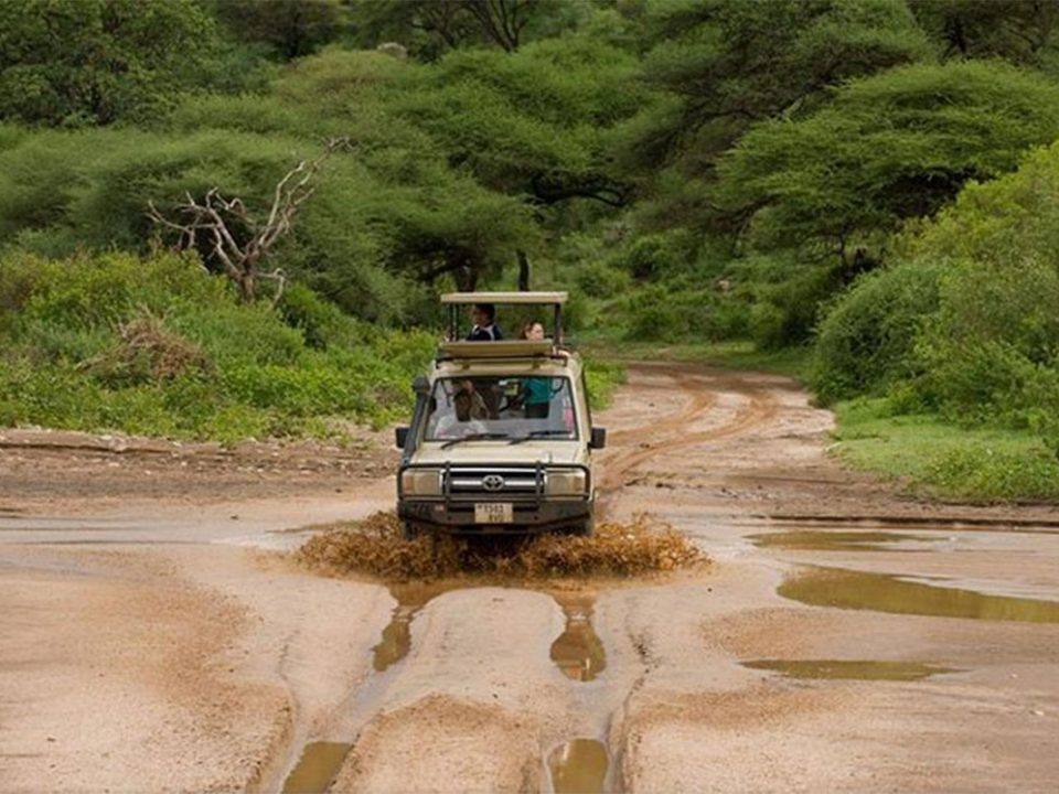 Why book a low season safari to East Africa