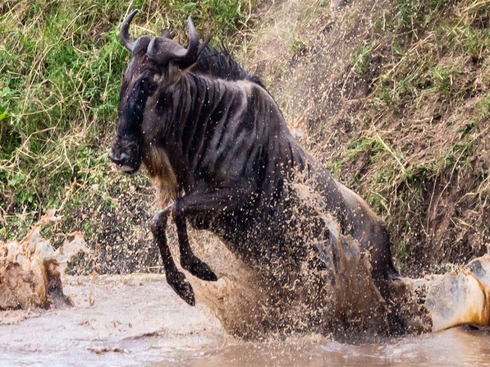 Reasons why you should visit Kenya for safari