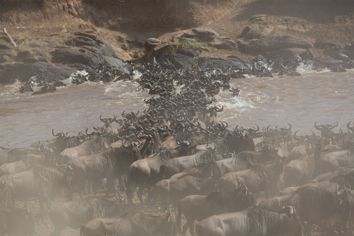 Why you should visit Masai Mara for safari