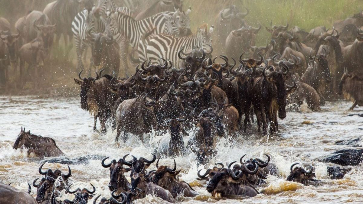 Guide to 2021/2022 wildbeest migration safari