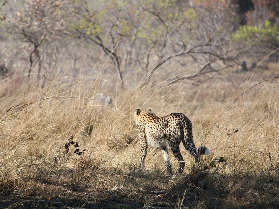 wildlife & animals of Kafue National Park