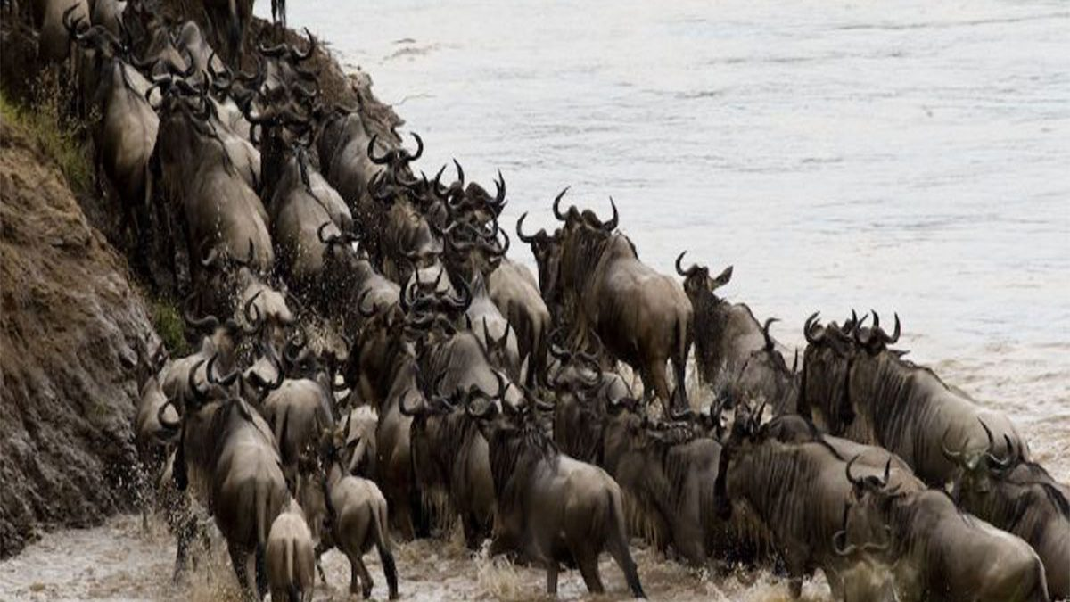 All you need to know before booking a wildebeest migration safari