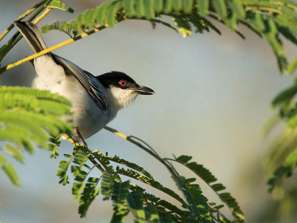 budget birding safaris in semuliki national park