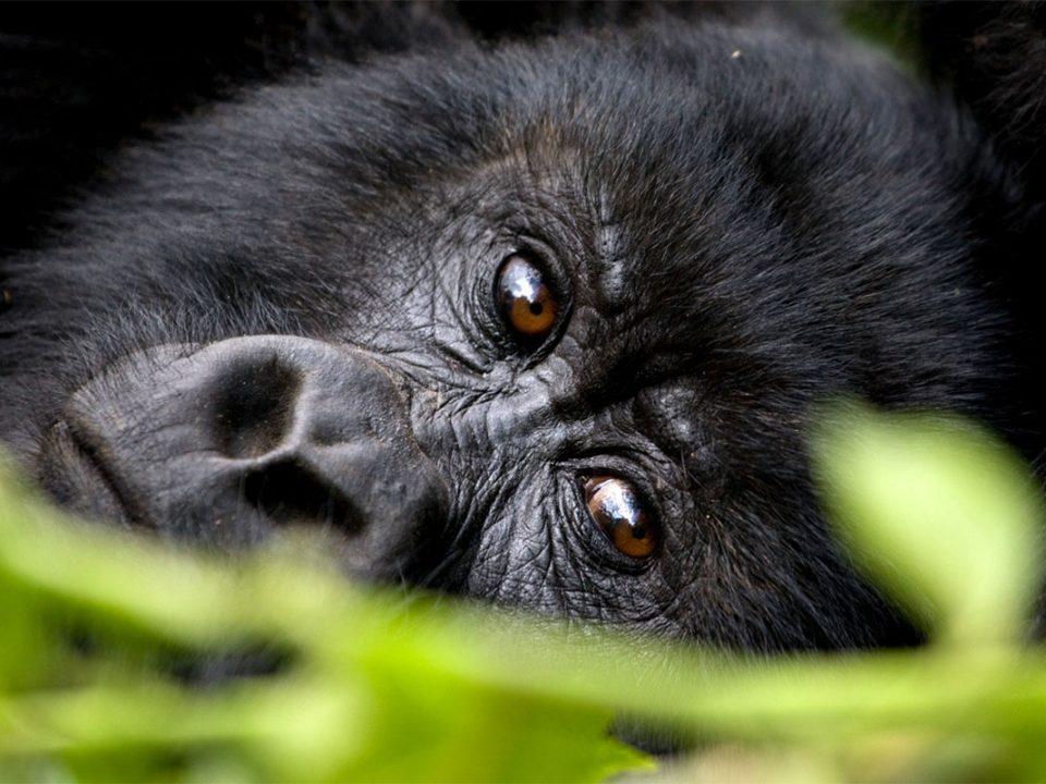 Summer holidy gorilla trekking safaris