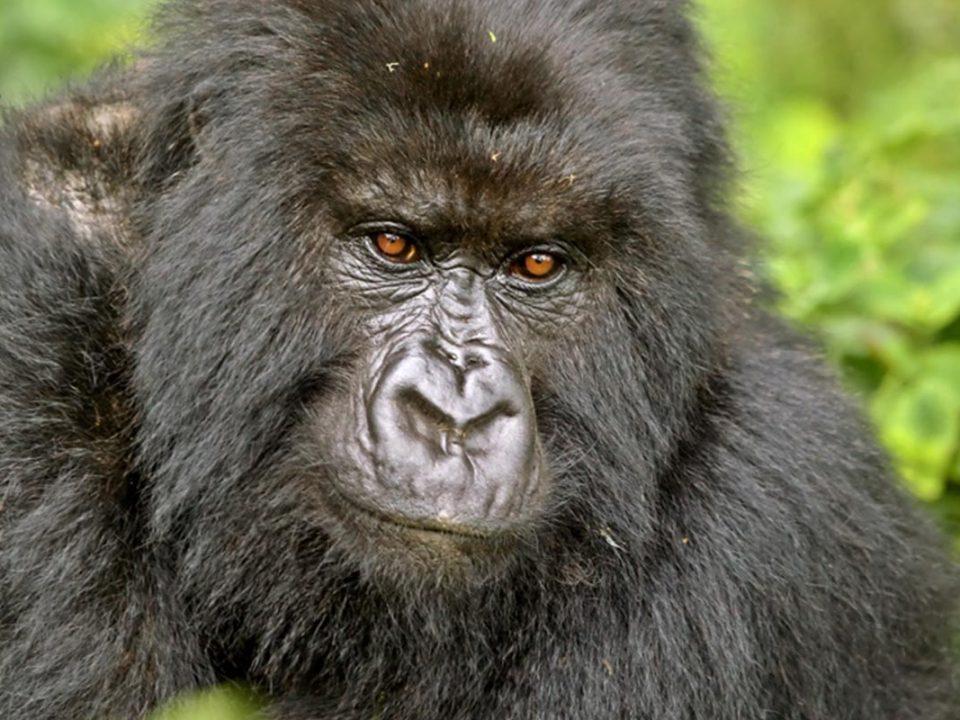 Plan your gorilla adventure in uagnda 2020