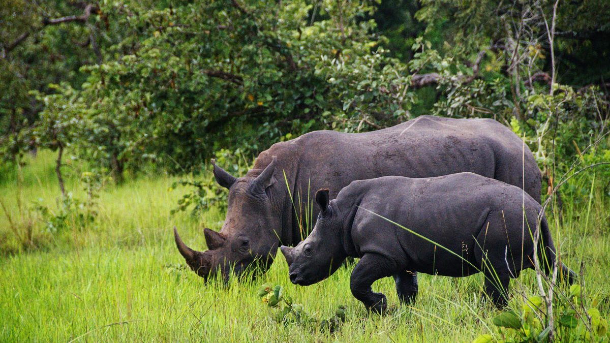 Zziwa Rhino Sanctuary,Great Adventures Uganda