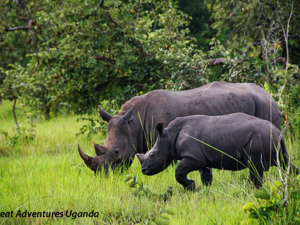 Zziwa Rhino Sanctuary,Great Adventures Uganda