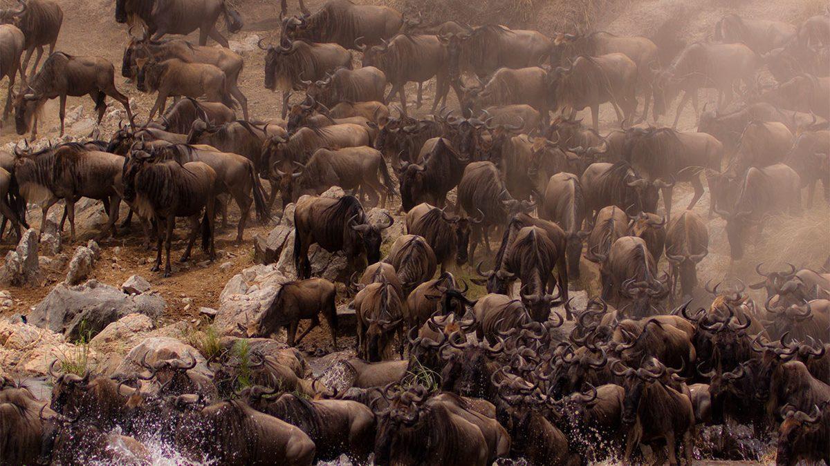 serengeti great wildebeest migration safari