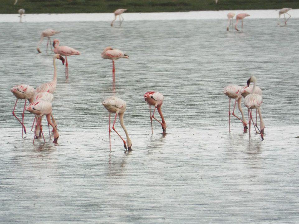 Where to see flamingos in Uganda